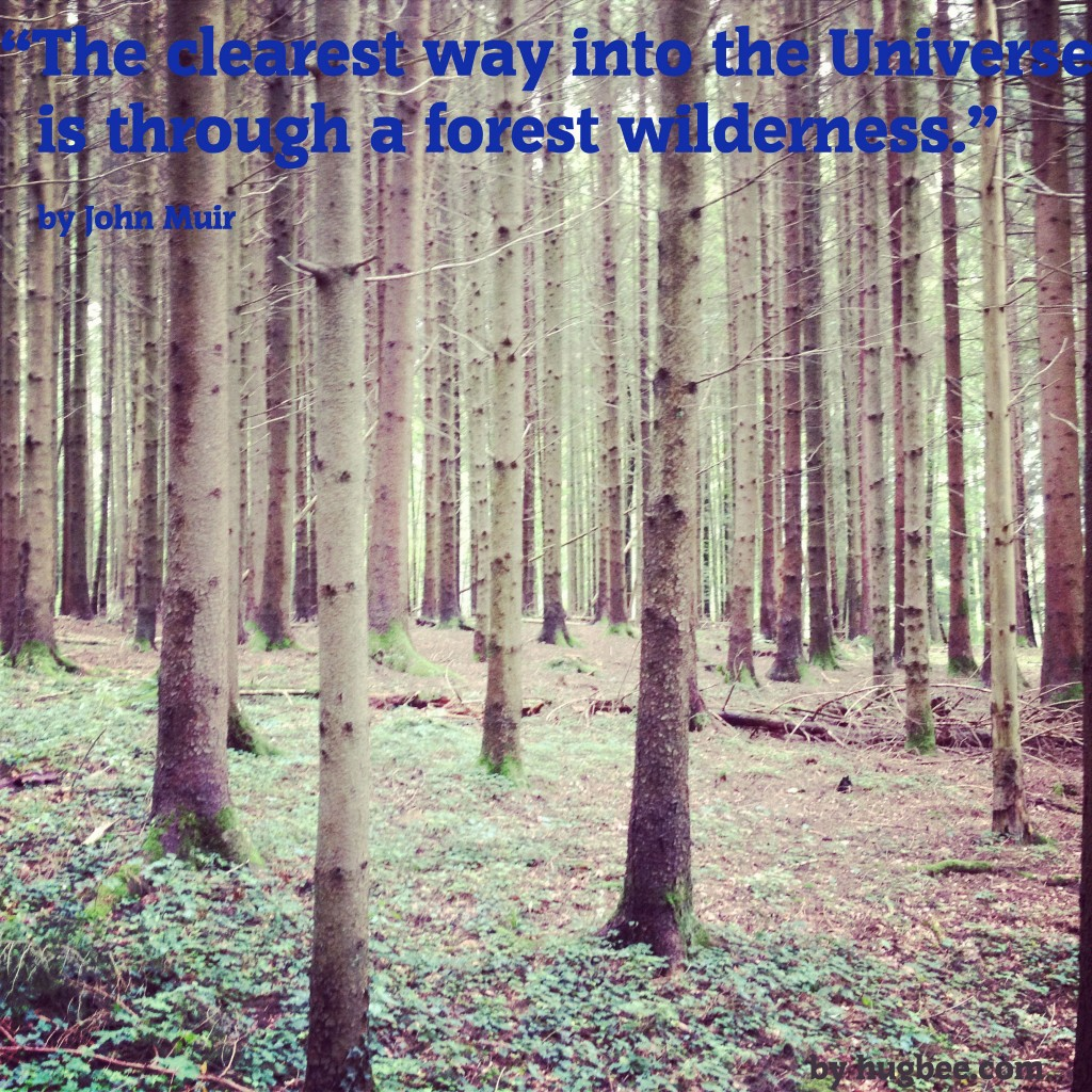 """""""The clearest way to the Universe is through a forest wilderness"""""""